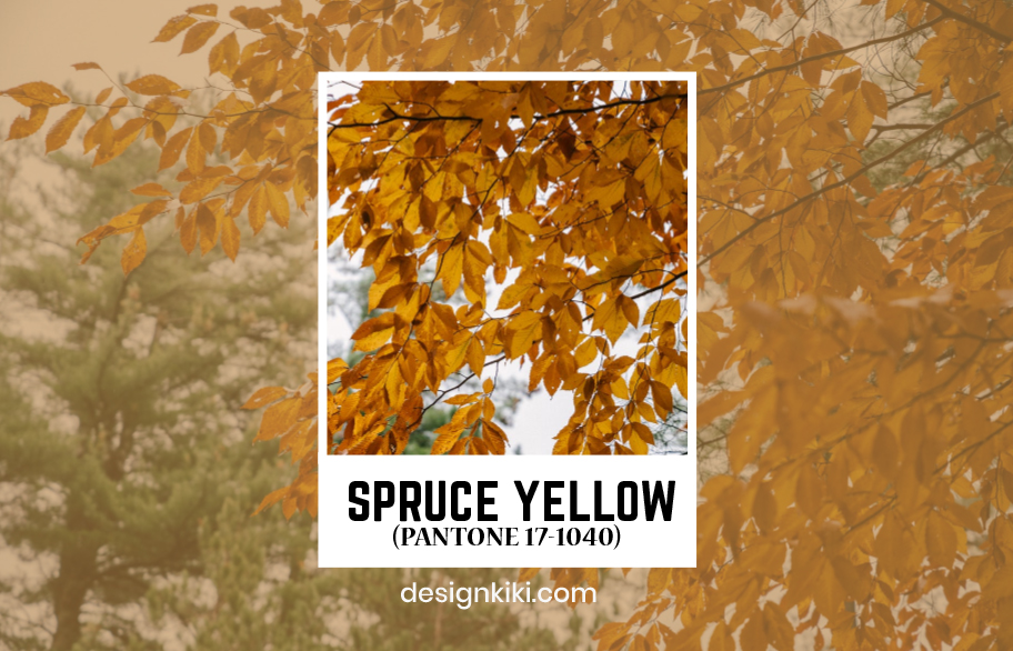 spruce yellow- best shades of yellow